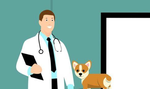 おしりにしっぽのあるコーギーブログの写真。犬の健康