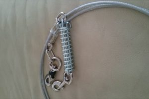 おしりにしっぽのあるコーギーブログの写真。鎖を新調したコーギー犬
