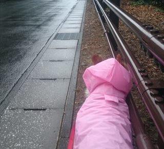 おしりにしっぽのあるコーギーブログの写真。雨の日のお散歩