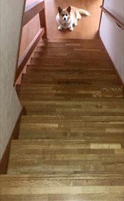 お尻に尻尾のあるコーギーのブログ。階段下で暇そうです。
